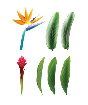 Bird of Paradise and Red Ginger