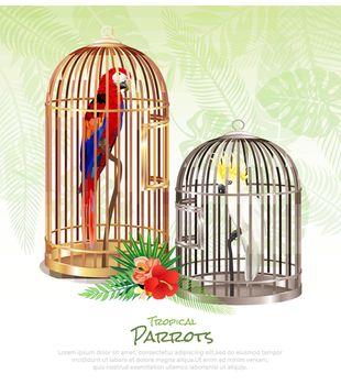 Bird Market Poster Background