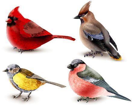 Winter Birds Set