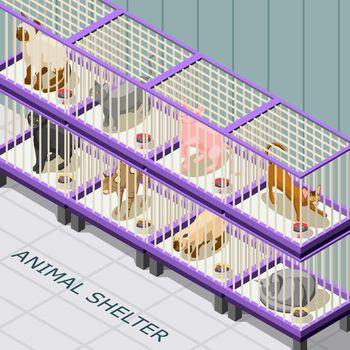 Cat Shelter Isometric Background