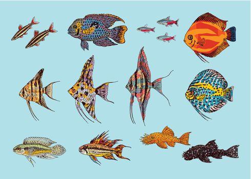 Beautiful Aquarium Fishes Collection