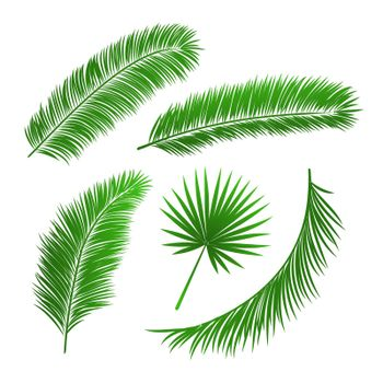 Collection of palm tree leaves
