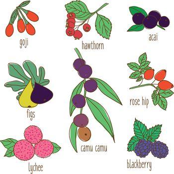 Colored Hand Drawn Botanical Food Set