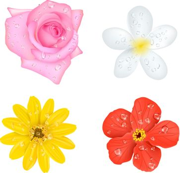 Four Flowers With Drops Set
