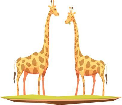 Giraffes Couple Animals Composition