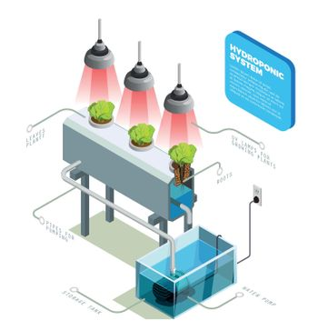 Hydroponic System Infographic Layout