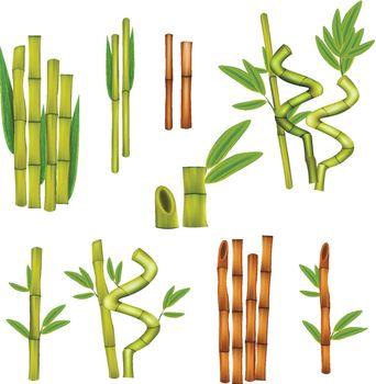 Bamboo Realistic Set