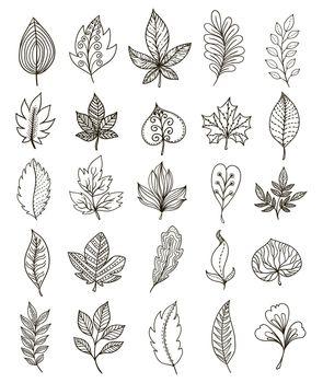 Hand Drawn Foliage Monochrome Set