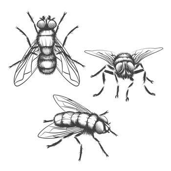 Hand drawn flies