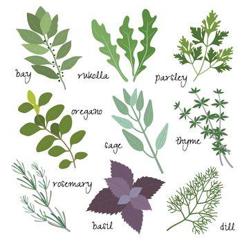 vector herbs