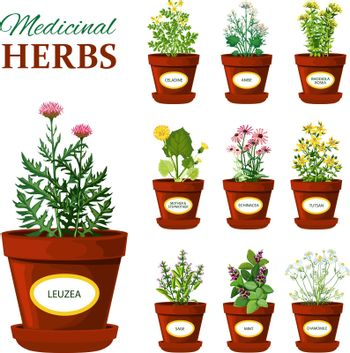 Medical Herbs In Pots With Labels