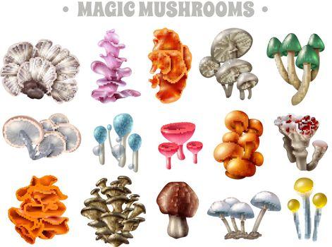 Magic Mushrooms Set