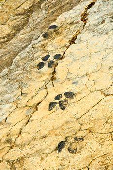 Ichnites Paleontological Deposit of Fuentesalvo, Spain