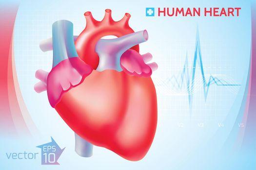 Medical Anatomical Cardio Template