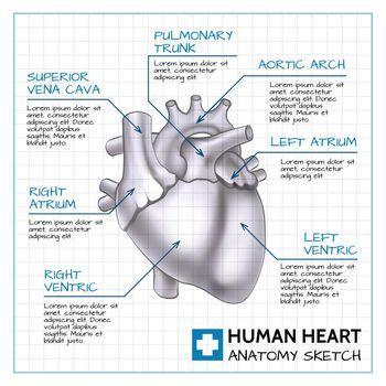 Medical Internal Organ Concept
