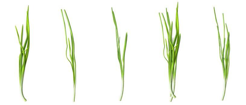 Green chive or onion leaves, fresh verdure