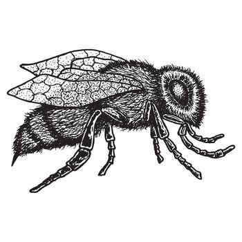 Monochrome Animal Icon