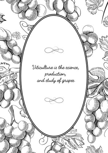 Oval Frame Composition With Grape Bunches Hand Drawn Sketch
