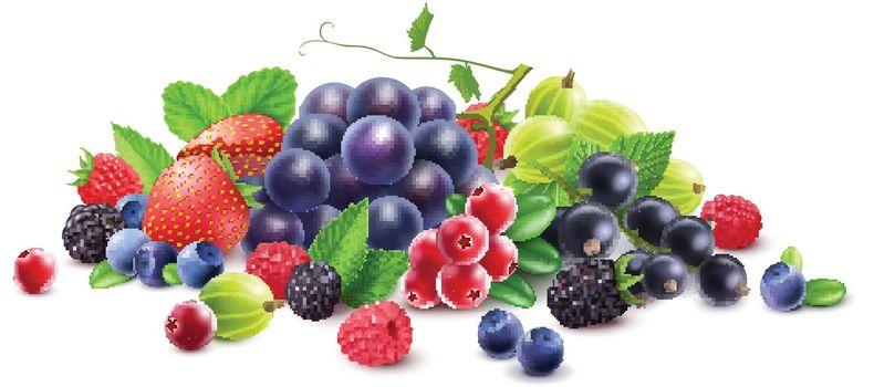 Ripe Berries Template