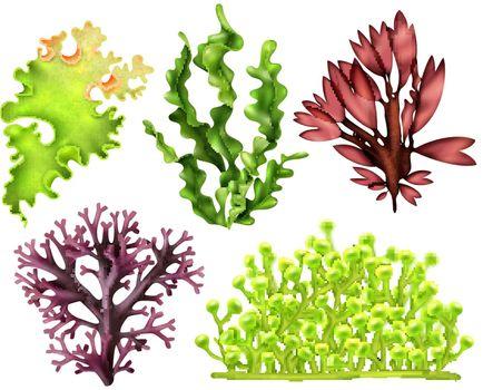 Realistic Sea Weeds Food Set