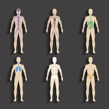 Human organs and body systems
