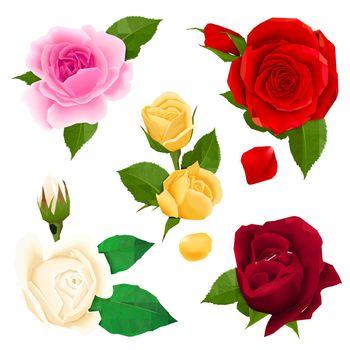 Rose Realistic Set