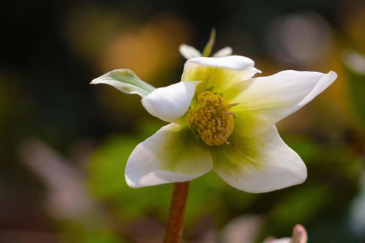 View of a young white blooming flower in the summer park.
