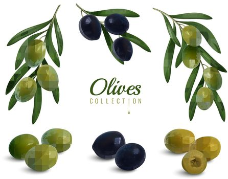 Realistic Olives Branches Set