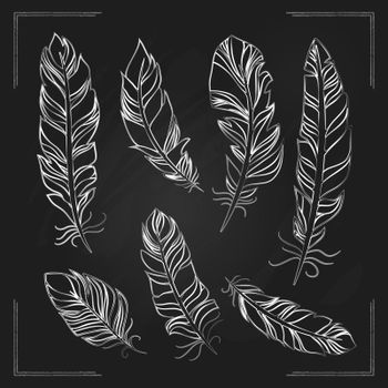 Feathers drawn with chalk on a blackboard
