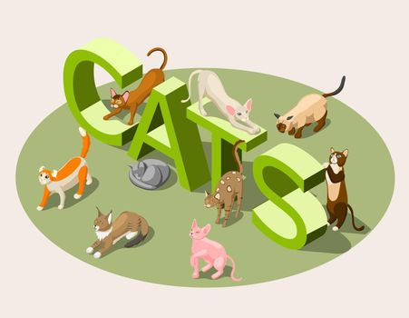 Purebred Cats Isometric Background