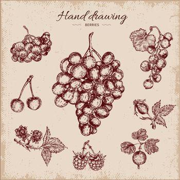 Berries Hand Drawn Design