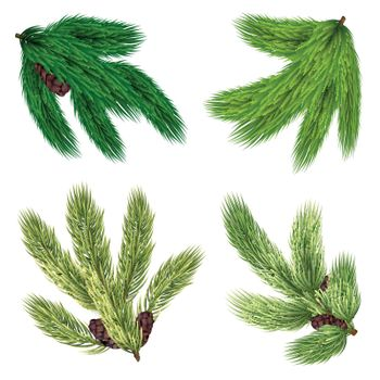 Green Branches Of Coniferous Trees Collection