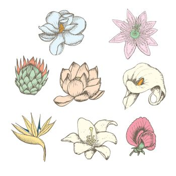Colored Drawing Botanical Exotic Flowers Set