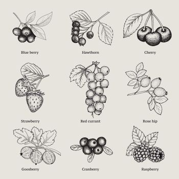 Vintage Natural Berries Collection