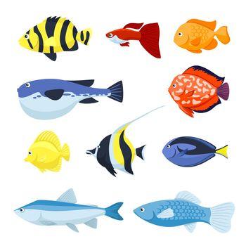 Vector fish set. Underwater and aquarium fishes