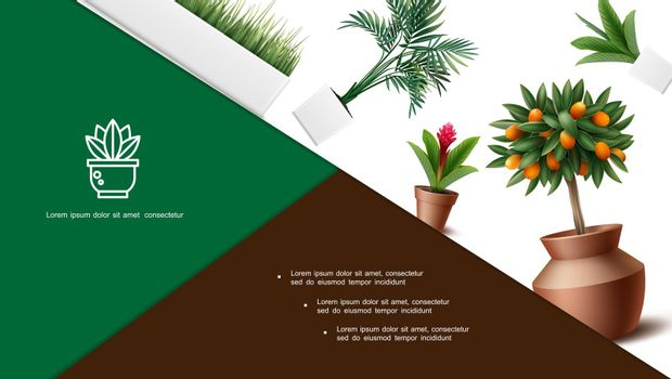 Realistic Home Plants Composition