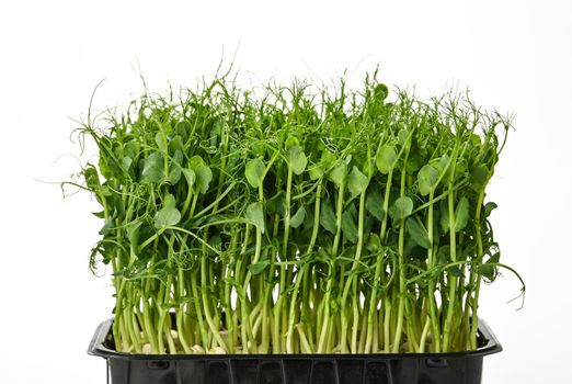 Green peas microgreen isolated on white