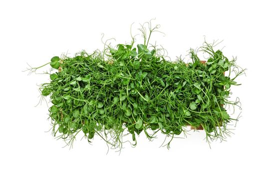 Green peas microgreen in wooden box on white