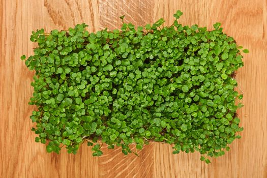 Green arugula microgreen on wooden cutting board