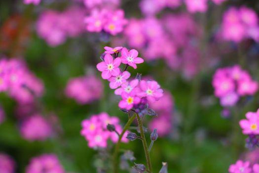 Beautiful perennial flowers bloom in the summer meadow.