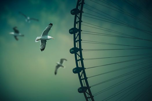 Dubai Eye and Seagulls