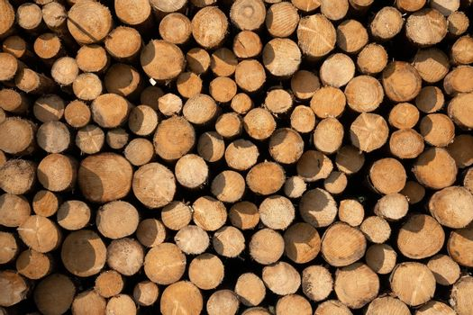 Forestry, log piles close up