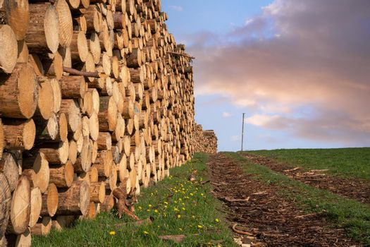 Forestry, log piles and footpath
