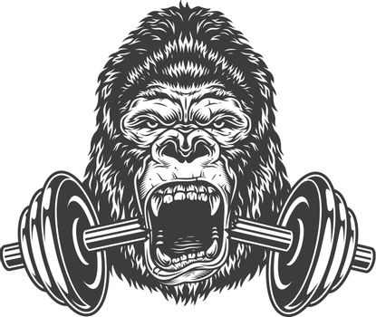 Bodybuilding concept with gorilla