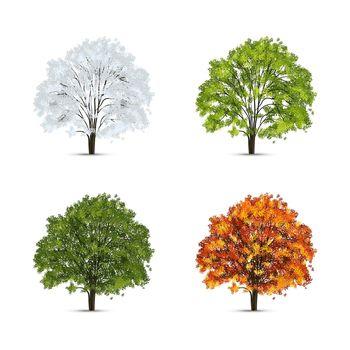 Tree Leaves Seasons Set
