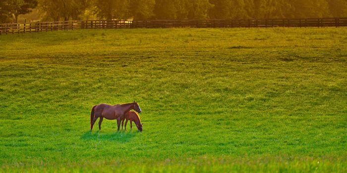 Mare and foal grazing on fresh green grass at sunset.